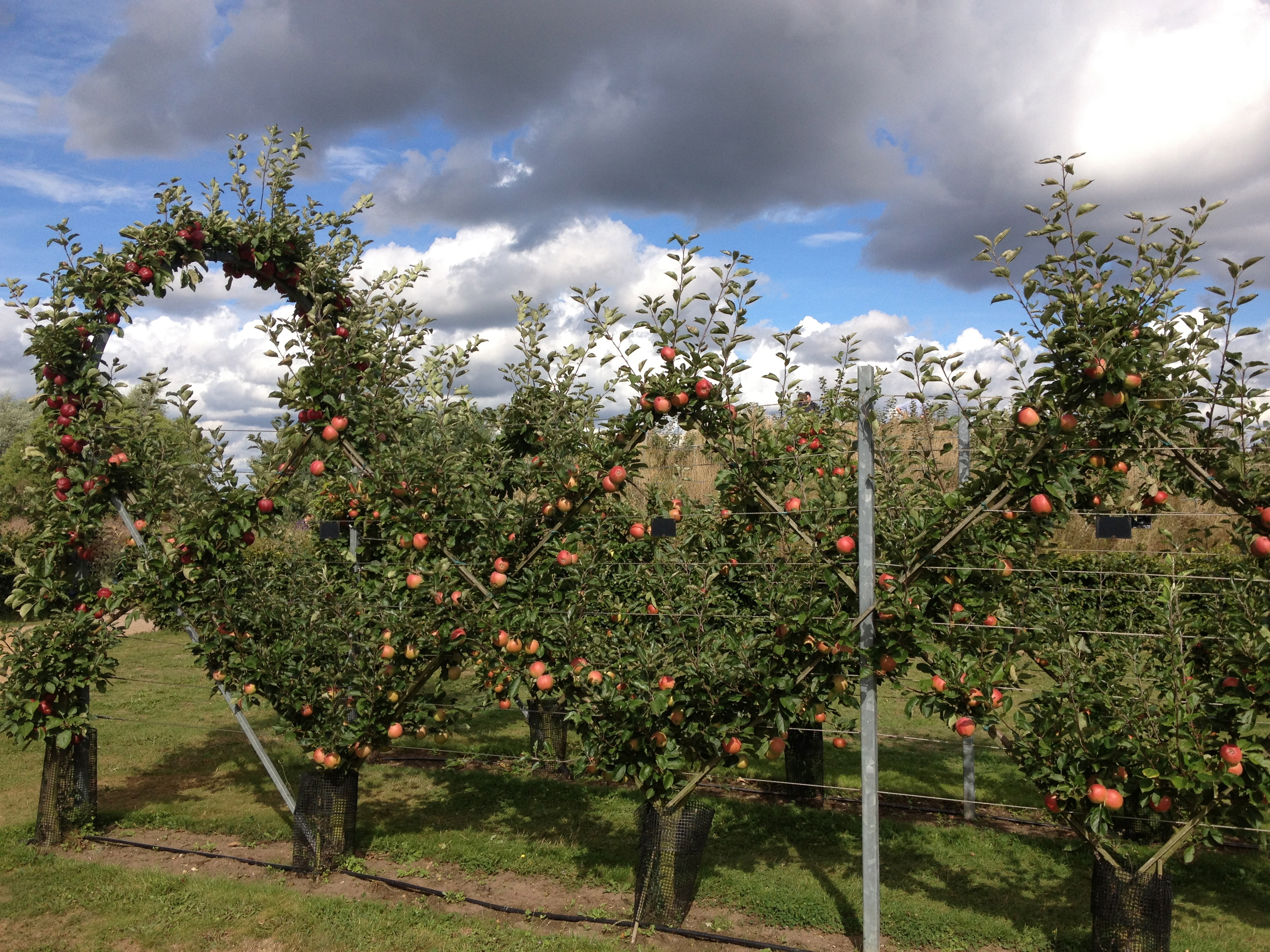 RHS Orchard