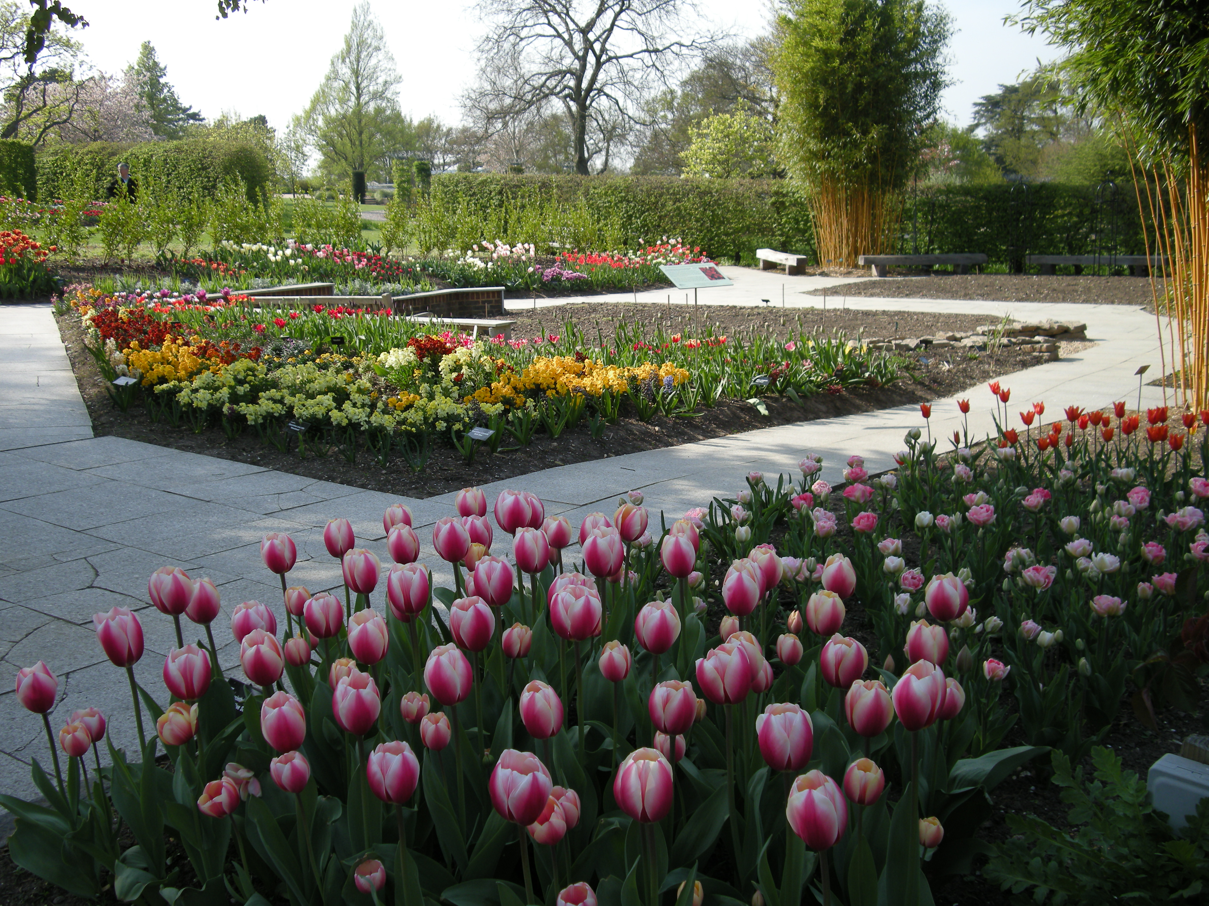 Tulips at Wisley